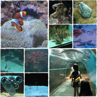 須磨海浜水族館 1