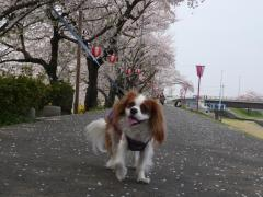 桜舞う中で。