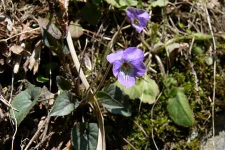 四万十川の花 2008年 春