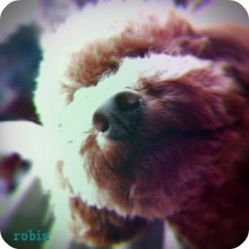 toy6663.jpg