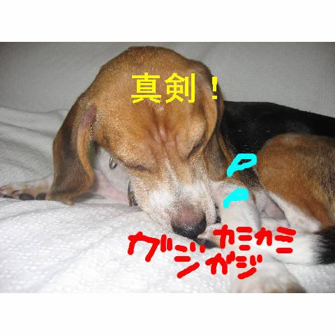 sinnkenn_20081011094515.jpg