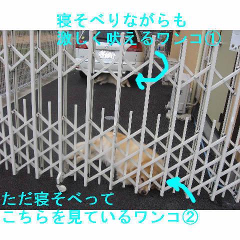 wankoda2.jpg