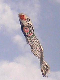 こいのぼり凧1