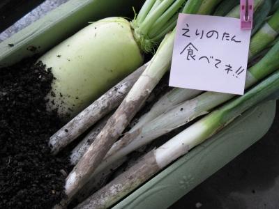 うちの畑♪新鮮泥付き野菜