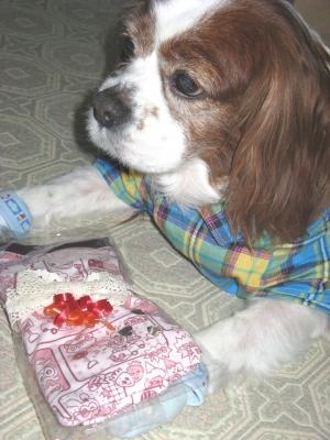 懸賞☆オーダーメイドの犬服を頂きました