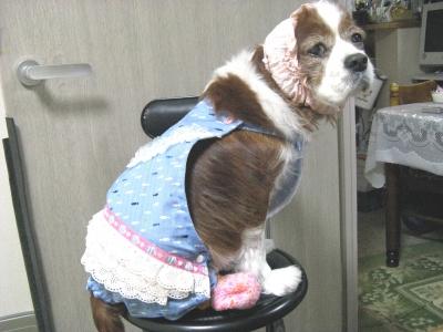 犬服♪まるで「IKKOサン」3