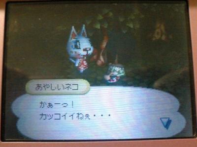 あやしい猫20060325b