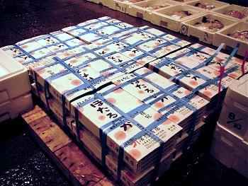 hotaruika2006.jpg