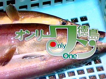 onlyone.jpg