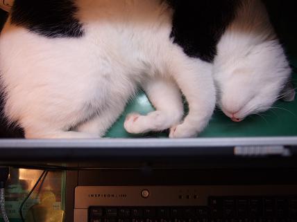 パソコン裏3