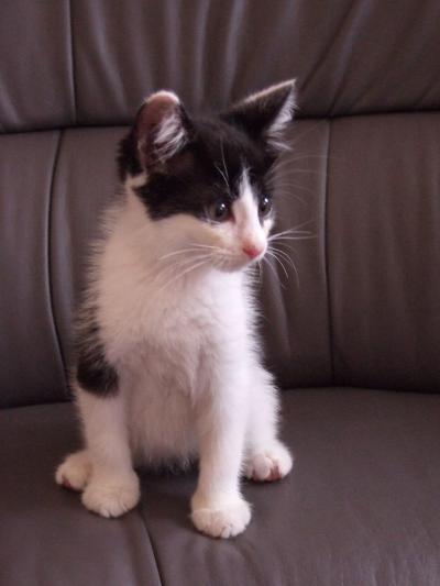 かわいい仔猫2