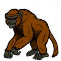 """""""エジプトの類人猿"""""""