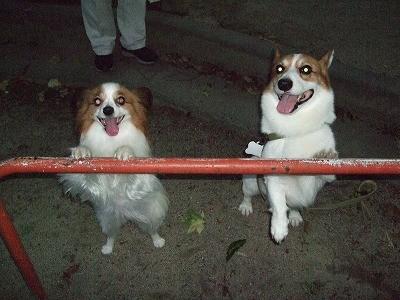 のんちゃんと鉄棒