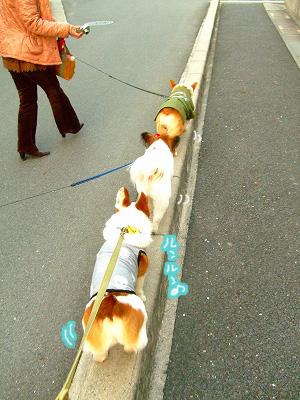 並んで縁石歩き~☆