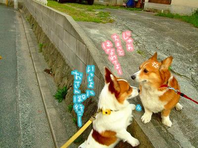 一緒にお散歩行こ~