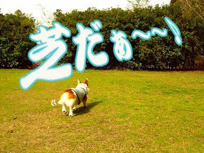 芝だぁぁ~