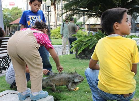 子どもたちに囲まれるイグアナ