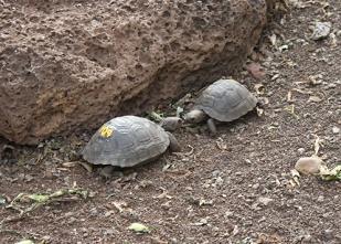 2匹の小亀