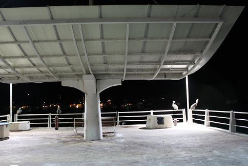 夜桟橋ペリカン