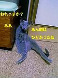 「オアシス」2