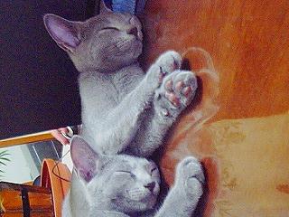 「寝姿うるさら」2
