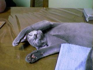 「寝姿うるる」3