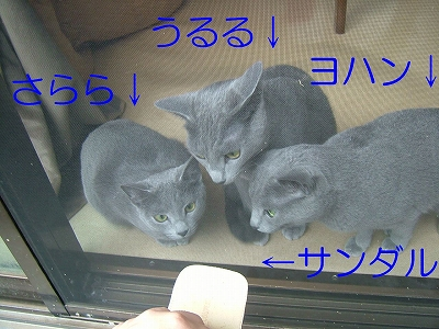 2007051902