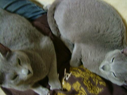 2008030906