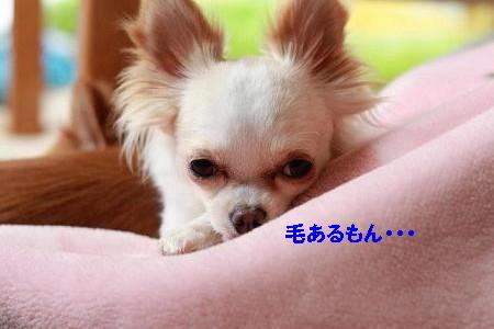 IMG_2591.jpg