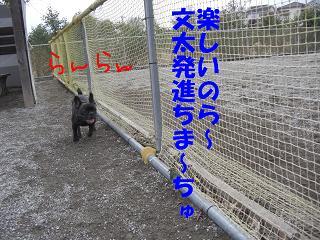 2008.12.13桶川ドッグラン22