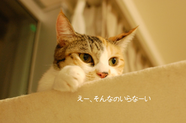 DSC_0010_20090913214215.jpg