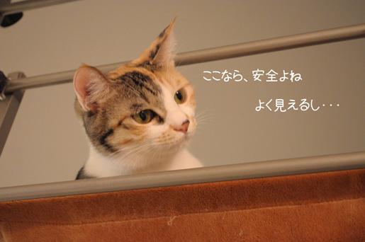 DSC_0010_20091128154900.jpg
