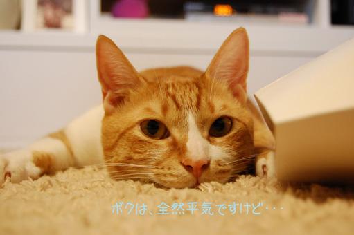 DSC_0013_20091103100216.jpg