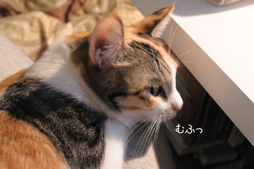 DSC_0014_20091109223945.jpg