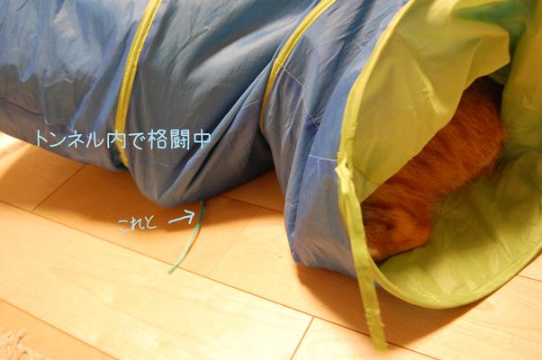 DSC_0020_20091003125402.jpg
