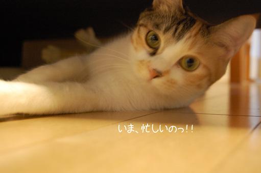 DSC_0030_20091110215031.jpg