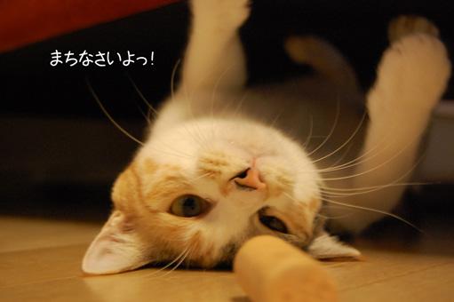 DSC_0035_20091110215030.jpg