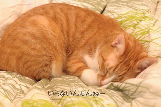DSC_0041_20091130234645.jpg
