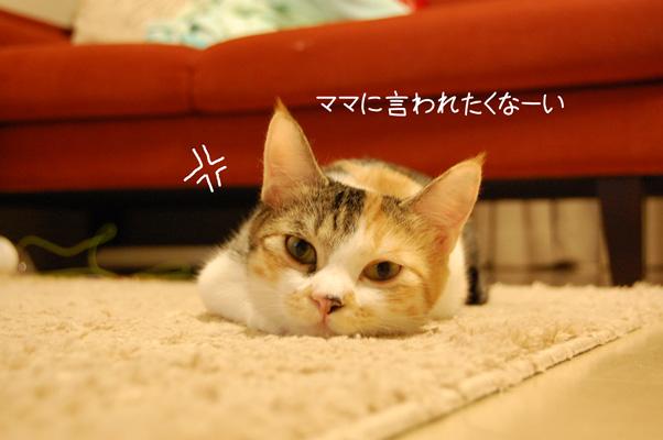 DSC_0044_20090805235919.jpg