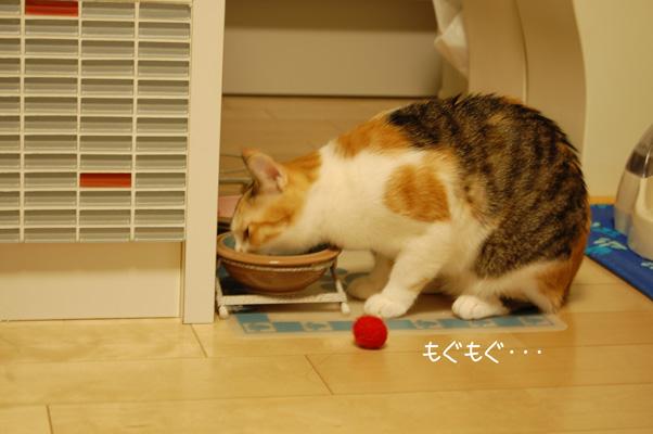 DSC_0044_20091012140132.jpg