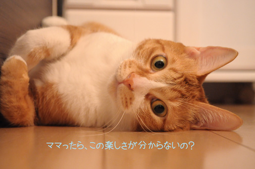 DSC_0048_20091121205024.jpg