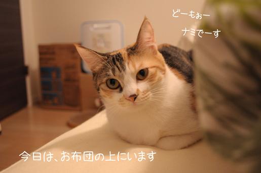 DSC_0054_20091217222436.jpg