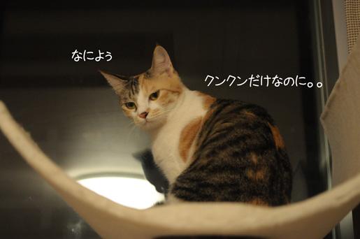 DSC_0060_20091119233303.jpg