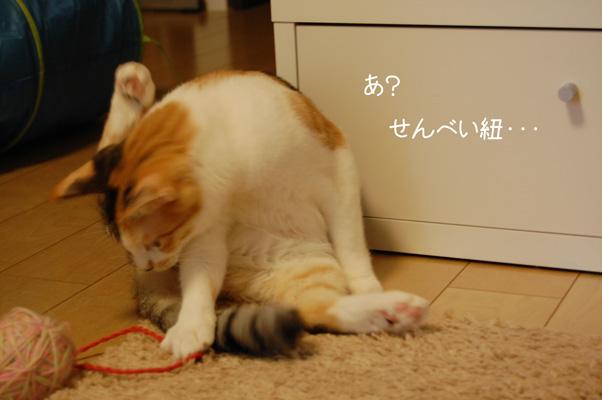 DSC_0061_20090831225946.jpg