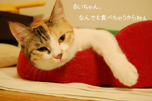 DSC_0062_20091104135538.jpg