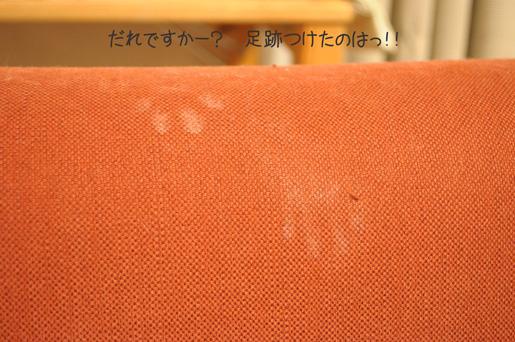 DSC_0063_20091119233303.jpg