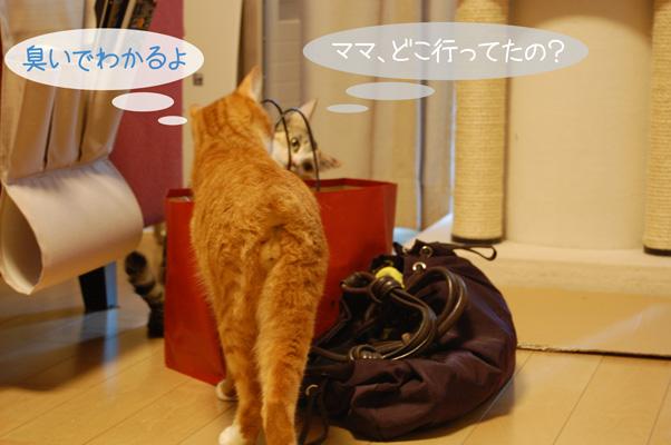 DSC_0073_20090817212230.jpg