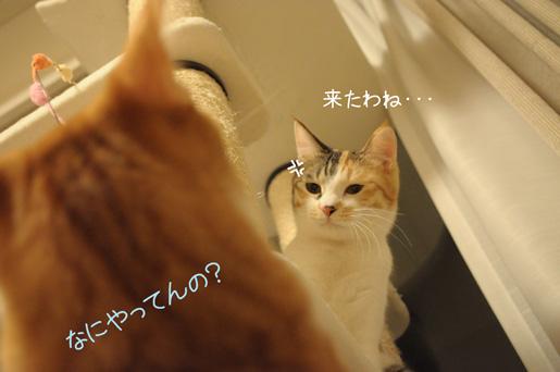 DSC_0083_20091208224231.jpg