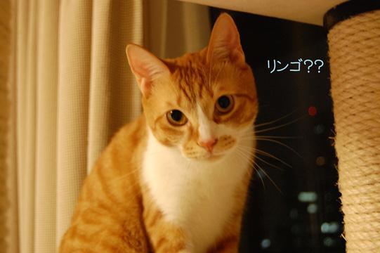 DSC_0092_20091015233828.jpg