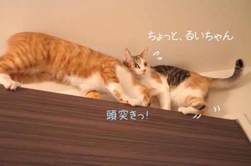 DSC_0093_20091231001002.jpg